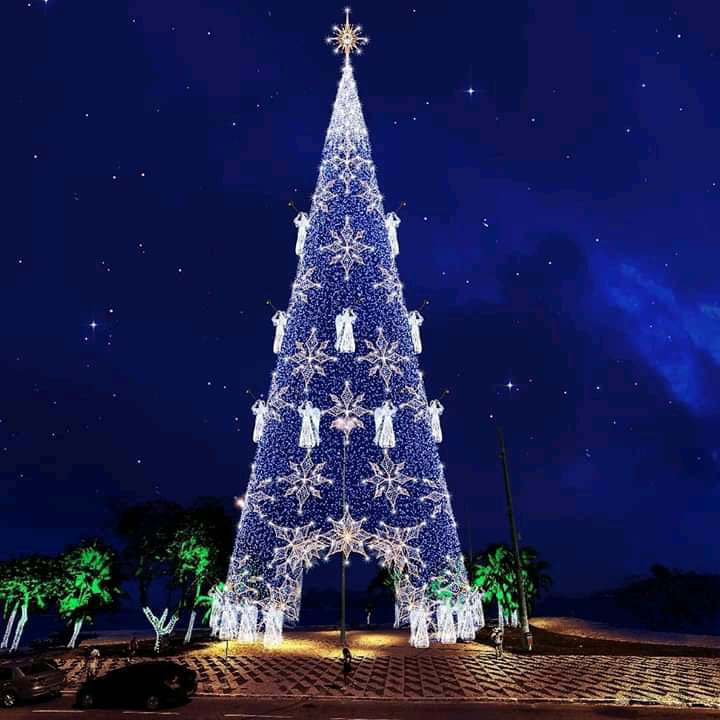 Árvore de Natal ficará pronta no dia 8 de dezembro