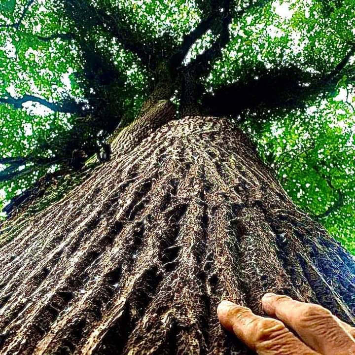 Arboribus já cadastrou quase 24 mil árvores - Notícias | Seconser